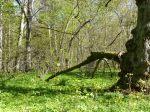 Der Urwald von Abruka.