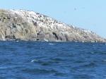 Der Felsen hat 500m gegen den Wind gestunken...