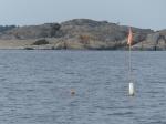 An der Westküste gibt es leider auch wieder Fischernetze ohne Ende...